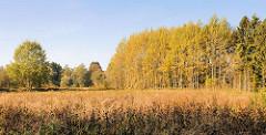 Wiese und Herbstbäume in der Alsterniederung in Hamburg Duvenstedt.