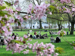 Frühling an der Hamburger Alster - die japanische Kirsche blüht, sonnenhungrige auf der Liegewiese und in den Hummelstühlen.