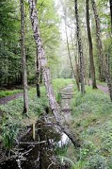 Raakmoorgraben im Naturschutzgebiet Raakmoor in Hamburg Hummelsbüttel. Birken und Schilfpflanzen wachsen am Grabenrand