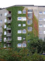 Efeu und Wein wächst an einer Hochhausfassade - Stadtteil Steilshoop
