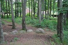 Buchenwäldchen beim Hügelgrab aus der Bronzezeit  -  Bilder aus Hamburg Langenbek - Sehenswürdigkeit des Stadtteils.