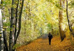 Herbstlicht durchflutet die dichten Laubbäume am Kollauwanderweg in Hamburg Niendorf - eine Walkerin geht durch das gelbe Laub, das auf dem Weg liegt.