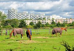 Pferdewiese mit grasenden Pferden im Hamburger Stadtteil Osdorf - im Hintergrund Hochhäuser / Wohnhäuser am Osdorfer Born.