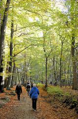 Herbstspaziergang im Laub - Herbstsonne scheint durch die Bäume - Herbstmotive aus dem Niendorfer Gehege in Hamburg Niendorf.