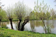 Teich mit Kopfweiden am Ufer - Bilder aus den Hamburger Stadtteilen - Fotos aus HH-Francop.