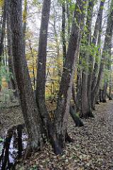 Bäume wachsen entlang dem Flusslauf der Saselbek.