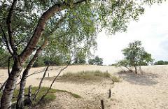 Birken am Rand der Grossen Boberger Düne im Naturschutzgebiet Boberger Niederung in Hamburg Lohbrügge.