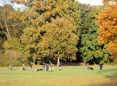 Hundespielplatz im Jenischpark - Hunde spielen in der Herbstsonne auf der Wiese, Bäume in Herbstfarben / Herbstblätter.