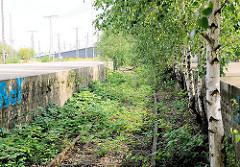 Gleisanlage mit Bahnsteig beim Oberhafen in der Hamburger Hafencity - die Gleise sind mit Wildkraut überwuchert, junge Birken wachsen am Bahnsteigrand.