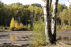 Naturschutzgebiet Eppendorfer Moor - Flachmoor, Schutzgebiet. Wasserfläche mit Baumbestand, Birkenwäldchen.