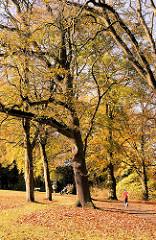 Herbstliche Bäume im Amsinckpark im Hamburger Stadtteil Lokstedt. Laub auf der Wiese - Jogger in der Herbstsonne, leuchtende Herbstblätter.