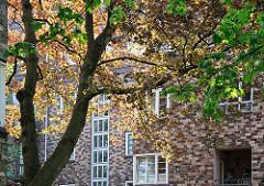 Strassenbaum im Frühjahrslicht - Klinkerfassade mit Sprossenfenstern.