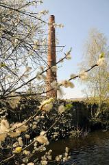 Blühende Weiden, Weidenkätzchen an der Bille - Industrieschornstein am Billbrookdeich.