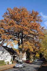 Herbstliche Alleebäume in der Poppenbüttler Hauptstrasse.