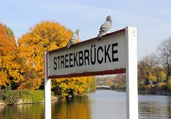 Anleger der Alsterschiffe an der Streekbrücke, zwei Tauben sitzen auf dem Schild - im Hintergrund Bäume in goldener Herbsttracht.