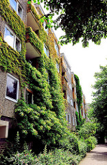Mit Rankpflanzen dicht bewachsene Fassade - Etagenhaus in Hamburg Steilshoop - begrünte Hausfassade.