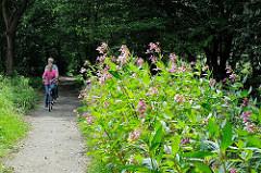 Blühendes Wildkraut am Ufer der Tarpenbek - RadfahrerIn auf dem Weg entlang des kleinen Flusses.