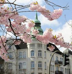 Frühling im Hamburger Stadtteil Sternschanze - Kirschblüte der Japanischen Kirsche - Altbau mit Giebelturm im Hintergrund.