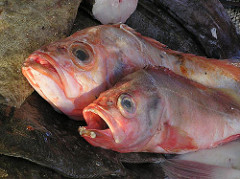 toter Fisch auf dem Markt.