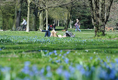 Hamburger Stadtpark Frühlingswiese Blaustern