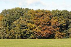 Fotos aus dem Bergstedter Naturschutzgebiet Hainesch Iland Herbstbäume am Waldesrand.