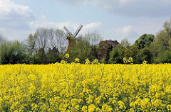 Ein Rapsfeld in gelber Blüte im Hamburger Stadtteil Allermöhe - die Mühle und das Haus gehören zum Stadtteil Reitbrook ud leigen auf der anderen Seite der Dove-Elbe.