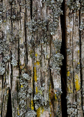 Detail eines verwitterten Holzpfahles / Holzdalbens an einer Kaimauer im Hafen Hamburgs.