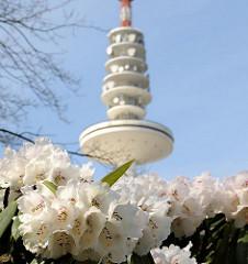 Frühlingsblüten in Planten un Blomen - der Rhododendron blüht in der Hamburger Grünanlage im Stadtteil St. Pauli.