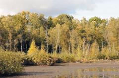 Herbstsonne im Eppendorfer Moor - Birkenwald im Herbst.