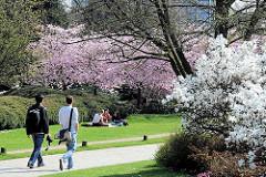 Spaziergang in der Frühlinssonne zwischen blühenden Sträuchern - auf der Wiese sitzen ParkbesucherInnen unter einem blühenden Kirschbaum - Bilder aus dem Stadtteil Hamburg St. Pauli.