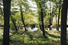 Laubbäume am Fluss Alster - bewachsenes Alsterufer in Hamburg Lemsahl-Mellingstedt.