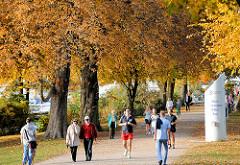 Herbst in der Freien und Hansestadt Hamburg - Herbstbäume am Ufer der Alster im Hamburger Stadtteil Uhlenhorst.