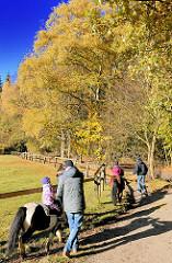 Kinderausritt auf Ponys entlang einer Weide im Niendorfer Gehege im Herbst - Herbstsonne und blauer Himmel - Bäume in Herbstfärbung.