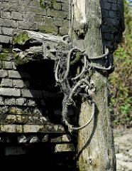 Alter verwitterter Holzdalben / Streichdalben an einer Kaimauer im Hamburger Hafen - Taue.