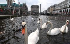 Der Alsterschwan ist seit mehr als 400 Jahren ein Wahrzeichen der Hansestadt Hamburg.