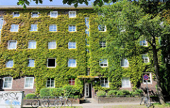 Mit grünen Rankpflanzen bewachsene Fassade eines mehrstöckigen Wohnblocks in Hamburg Barmbek Nord.
