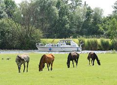 Pferde grasen auf einer Weide am Ufer der Dove-Elbe - ein Sportboot fährt flussaufwärts.