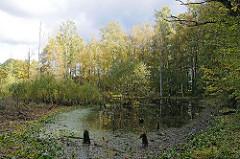Tümpel im Wald Naherholungsgebiet Duvenstedter Brook