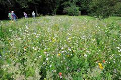 Blumenwiese mit Wildblument, Spaziergänger - Naherholungsanlage Ohlsdorfer Parkfriedhof.