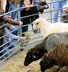 Landmarkt in Hamburg Bergedorf - Kinder sehen sich Schafe an, die auf dem Bergedorfer Herbstmarkt ausgestellt sind.