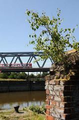 Auf einer zerfallenen Ziegelmauer wächst eine junge Birke. Hinter der Ruine ein Poller am Kai zum Oberhafenkanal. Über die Eisenbahnbrücke fährt eine S-Bahn Richtung Hamburg Hauptbahnhof.