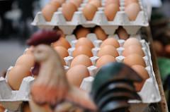 Frische Eier in Kartons - Hofladen.