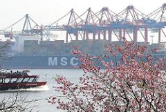 Kirschbluete Japanische Kirschen in Hamburg an der Elbe