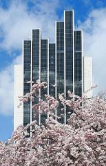 Hotelgebäude am Dammtor bei der Grünanlage Planten un Blomen - rosafarbene Japanische Zierkirschen blühen im Park im Hamburger Stadtteil St. Pauli.