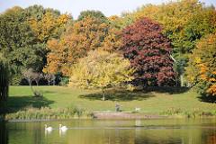 Herbst in Hamburg Winterhude - prächtig gefärbte Herbstbäume am Stadtparksee - ein Schwanenpaar schwimmt auf dem Wasser - Spaziergängerin mit Hund am Ufer des Sees.