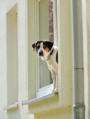 Wohnblock Koldingstrasse  - ein Hund im Fenster des Mehrfamilienhauses.