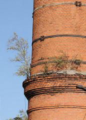 Fabrikschornstein - Ziegelschornstein - junge Birken im Mauerwerk - Billbrookdeich