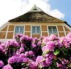 Blühender Rhododendron vor einem historischen reetgedeckten Fachwerkhaus in Hamburg Neuengamme.