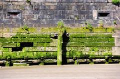 Kaimauer bei Niedrigwasser im Hamburger Hafen - der Bereich unter der Wasserlinie ist mit Algen bewachsen.