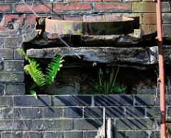 Verrostete Halterungen für einen Streichdalben an einer Kaimauer im Hamburger Hafen. Farn und Gräser wachsen in der Mauernische;  Reste vom alten Hamburger Hafen.
